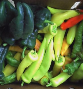 hotpeppers (800x606) (Small)